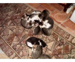 Pisicuti pentru donatie