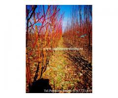 Pomi fructiferi altoiti - peste 70 soiuri aclimatizate - pomi cu coroana pre-formata langa Bucuresti