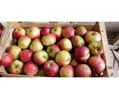 Vand mere soiurile Ionatan si Rosu delicios